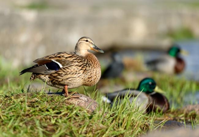 bird-watching-bucharest